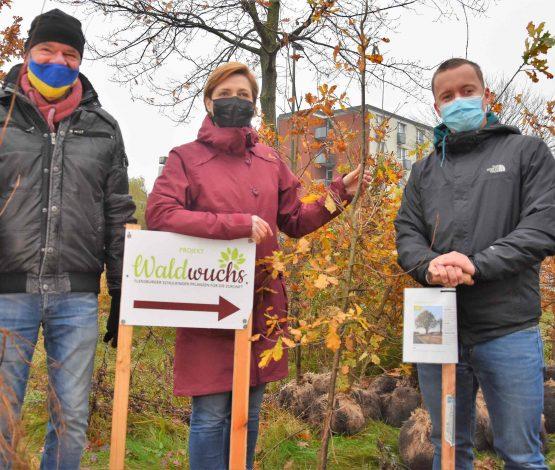 Stadtpräsident Hannes Fuhrig (links) sowie Simone Lange (Oberbürgermeisterin und Klimapakt-Vorstand) überreichen Dennis Hoffmann aus Harrislee eine Stieleiche.